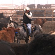 JBS Five Rivers Kuner Feedlot in Kersey, Colorado