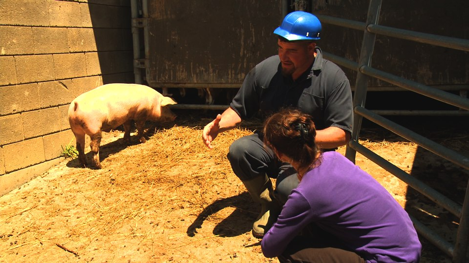 Eric shows me pig in pen