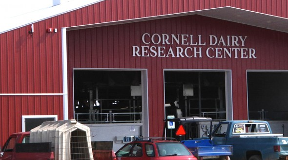 Cornell Dairy Barn Sign
